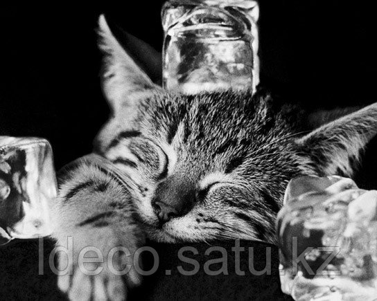 Wizard - Арт-постер Cool Cat II (кот, котенок, лежит, морда, лед.