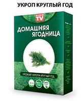 Чудо-набор для выращивания овощей и зелени дома «Сказочный огород круглый год» без ГМО (Укроп)