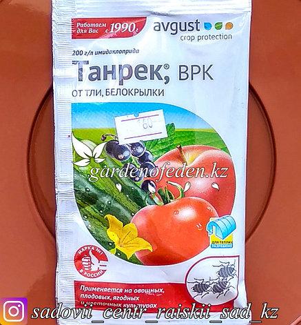 "Avgust. Средство от тли и белокрылки ""Танрек ВРК""., фото 2"