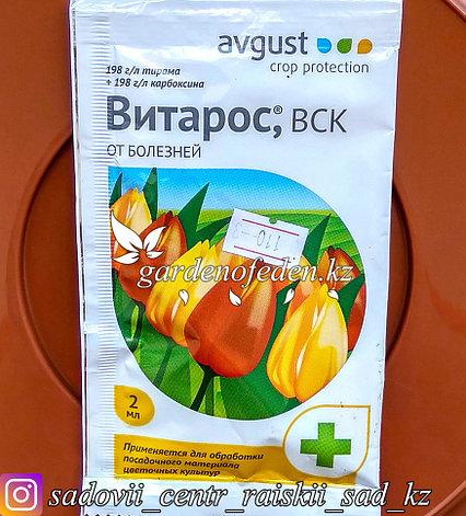 """Avgust. Средство от болезней растений """"Витарос ВСК"""". 2мл., фото 2"""