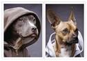 Бл 40л Wсп A6 DDH4/2-EAC выб УФ двойной Dogs in da hood, фото 2