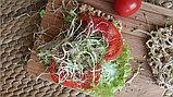 Семена для проращивания «Французский микс» микрозелень, фото 2