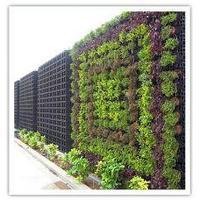 Вертикальное озеленение, фитодизайн стен