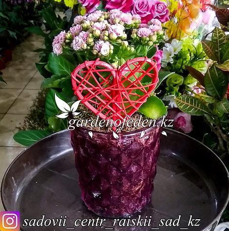 Каланхоэ (в декоративной, стеклянной вазочке + декор), фото 2