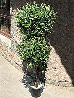 Дерево Олива искусственная