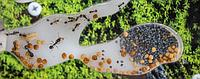 Муравьиные фермы (формикарии)