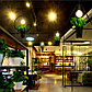 Светильник подвесной (люстра с растением), фото 3