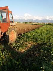 Услуги - агро, сельхоз.