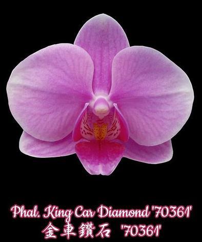 """Орхидея азиатская. Под Заказ! Phal. King Car Diamond """"70361"""". Размер: 2,5""""., фото 2"""