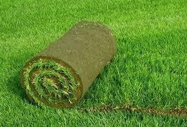 Продажа рулонного газона, фото 2