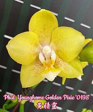 """Орхидея азиатская. Под Заказ! Phal. Younghome Golden Pixie """"0198"""". Размер: 2.5""""."""