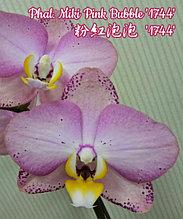 """Орхидея азиатская. Под Заказ! Phal. Miki Pink Bubble """"1744"""". Размер: 2.5""""."""
