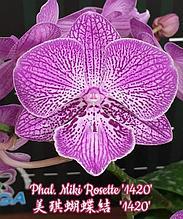"""Орхидея азиатская. Под Заказ! Phal. Miki Rosette """"1420"""". Размер: не указан."""