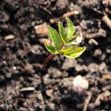 Садовые растения и грунты, общее