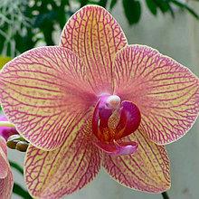 Редкие азиатские орхидеи от разных поставщиков. Под заказ!