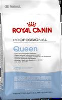 Royal Canin Queen сухой корм для беременных и кормящих кошек