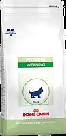 Royal Canin Weaning Pediatric сухой корм для котят от 4 недель до 4-х месяцев с ослабленным иммунитетом