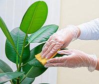 Уход и комплексное обслуживание комнатных растений