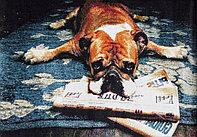 Ковёр Украина KOLIBRI FRIZE 1,6х2,3 11277/180 Собака Бульдог