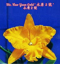 "Орхидея азиатская. Под Заказ! Blc. Haw Yuan Gold. Размер: 4.5""."