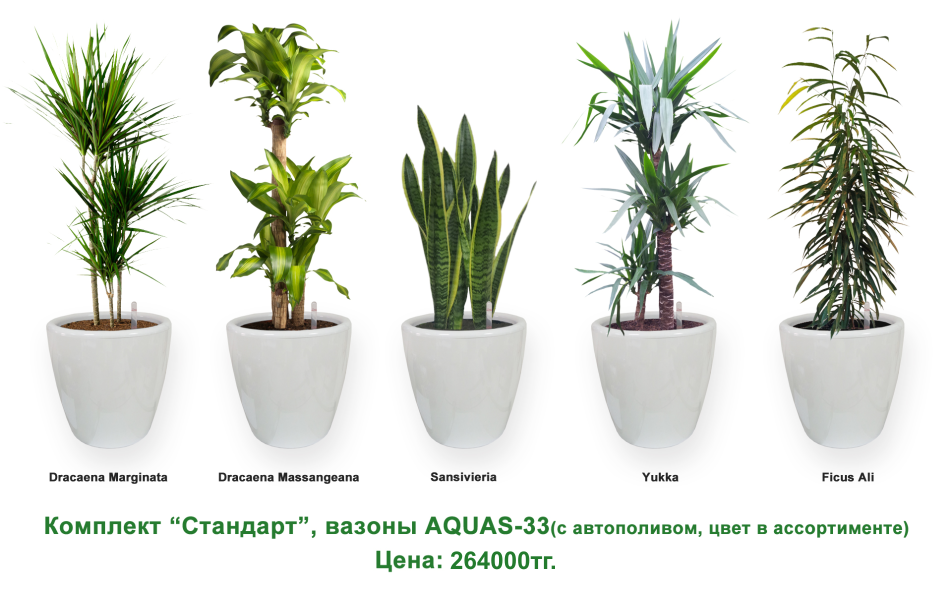 Экспресс - озеленение, комплект «Стандарт»