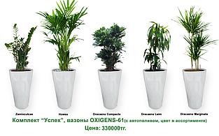 Экспресс - озеленение, комплект «Успех»