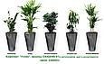 Экспресс - озеленение, комплект «Успех», фото 2