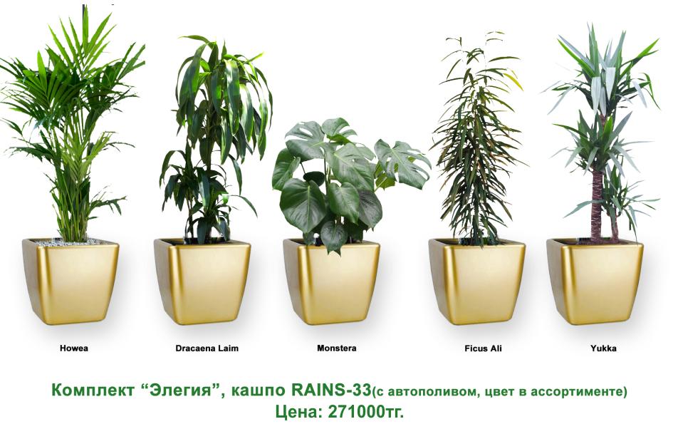 Экспресс - озеленение, комплект «Элегия»