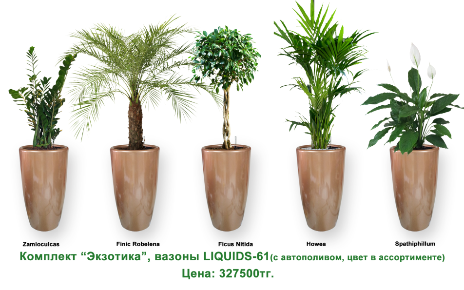 Экспресс - озеленение, комплект «Экзотика»
