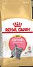 Сухой корм для котят британской короткошерстной от 4 до 12 месяцев Royal Canin British Shorthair Kitten