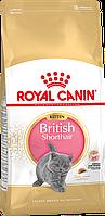 Royal Canin British Shorthair Kitten сухой корм для котят британской короткошерстной от 4 до 12 месяцев