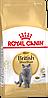 Royal Canin British Shorthair сухой корм для кошек породы британская короткошерстная