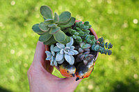 Пересаженные растения