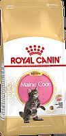 Royal Canin Maine Coon Kitten сухой корм для котят породы мейн-кун до 15 месяцев