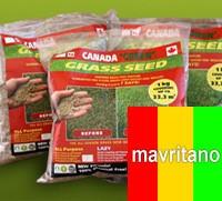 КАНАДА ГРИН MAVRITANO (мавританский газон с луговыми цветочками)