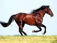 Комибикорм для лошадей
