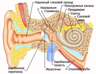 Слуховая труба обеспечивает вентиляцию уха