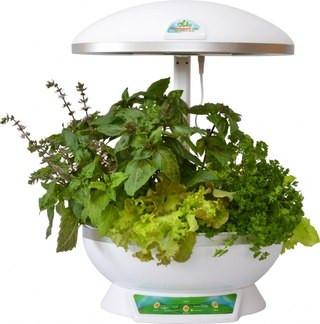 Выращивание салата с помощью гидропонной установки Домашний сад