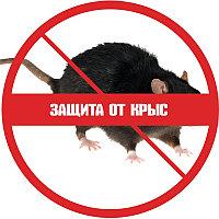Защита от крыс