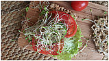 Семена микс для проращивания «Молодость» микрозелень, фото 2