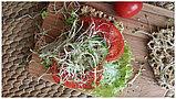 Семена микс для проращивания «Стройность» микрозелень, фото 2