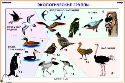 """Кодотранспаранты """"Зоология . Птицы"""" (12 пленок)"""