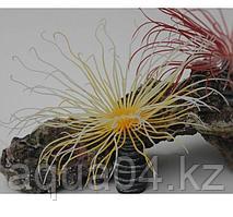 Коралл силиконовый желтый 3*3*15 см