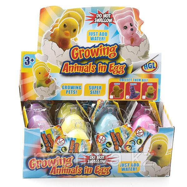 Игрушка яйцо с кроликом, растущим в воде (в ассортименте)