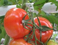 Кистедержатели томатные, тип «улитка» 6мм, фото 1