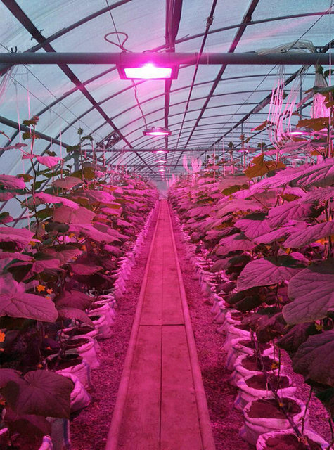 Урожай огурцов и помидор был спасен зимой, когда шел снегопад три дня и света катастрофически не хватало, за счет фитосветильников полного спектра IP65.