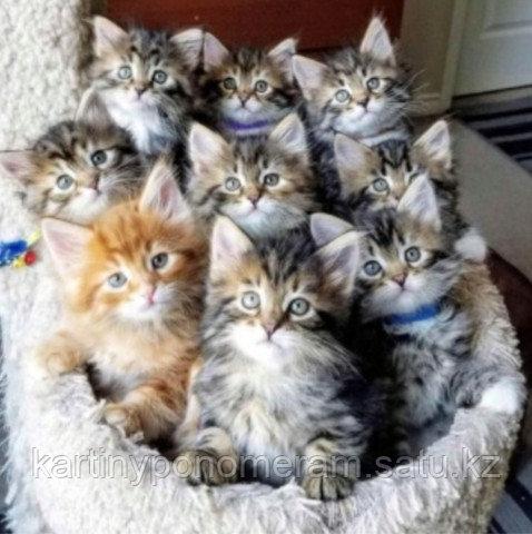 "Картина по номерам ""Котятки"""