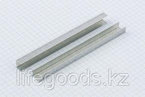 Скобы, 8 мм, для мебельного степлера, усиленные, тип 140,1250 шт Gross 41738, фото 2