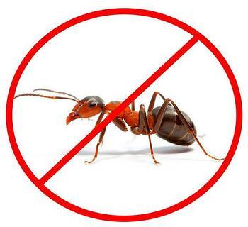 Обработка от муравьев.