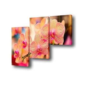 """Модульная картина на подрамнике """"Орхидея"""", 1 — 50×50, 2 — 50×75 см, 150x75 см"""